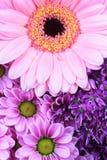 抽象紫色和桃红色花 免版税库存图片