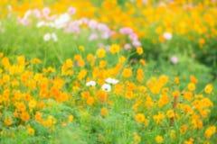 抽象黄色开花与被弄脏的花的背景 免版税库存图片