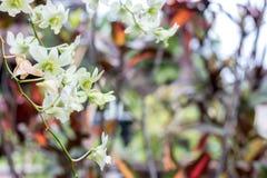 抽象黄色热带花背景 在绿色的美丽的热带花弄脏了背景 巴厘岛印度尼西亚 库存照片