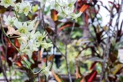 抽象黄色热带花背景 在绿色的美丽的热带花弄脏了背景 巴厘岛印度尼西亚 免版税库存照片