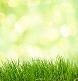 抽象绿色自然本底。 免版税库存照片