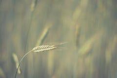 抽象绿色自然背景- whea 图库摄影