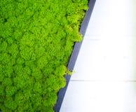 抽象绿色被稳定的青苔表面装饰背景 库存照片