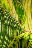 抽象绿色 库存照片