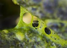 抽象绿藻类 免版税库存图片