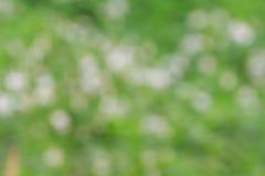 抽象backdop背景迷离植物群重点本质阳光 免版税库存图片