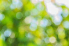 抽象bokeh和被弄脏的绿色自然背景 库存图片
