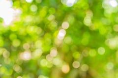 抽象bokeh和被弄脏的绿色自然背景 库存照片