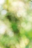 抽象bokeh和被弄脏的绿色自然背景 免版税库存图片