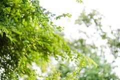 抽象bokeh自然背景和美丽的墙纸 绿色叶子优质Defocus在树的 图库摄影
