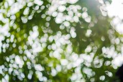 抽象bokeh自然背景和美丽的墙纸 绿色叶子优质Defocus在树的 库存照片