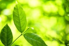 抽象bokeh自然背景和美丽的墙纸 绿色叶子优质Defocus在树的 免版税库存图片