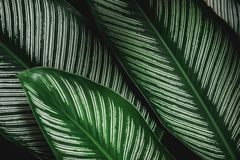 抽象bokeh自然背景和美丽的墙纸 绿色叶子优质Defocus在树的 免版税图库摄影