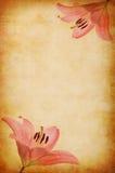 抽象lilly背景grunge粉红色 免版税库存图片