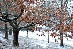 拂去的灰尘的早期的雪 免版税库存照片
