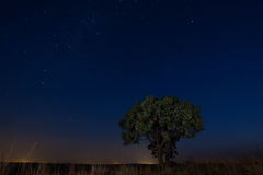 担任主角与孤立树褐色草和银河柔光的scape 图库摄影