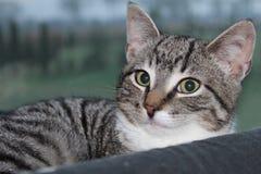 担任主角在照相机的公猫 免版税库存图片