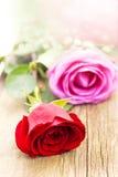 拉丁文和玫瑰 库存图片