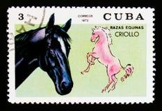 拉丁美洲各国的人马马属ferus caballus,马助长serie,大约1972年 库存图片