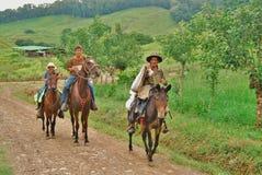 拉丁美洲的牛仔   库存照片