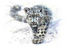 拉丁豹子名字雪uncia 免版税库存图片