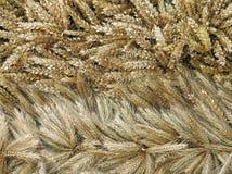 拉伊和麦子耳朵样式 库存照片