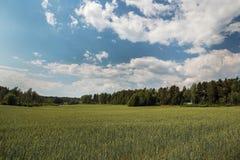拉伊领域在芬兰 库存图片