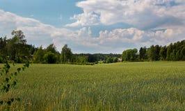 拉伊领域在芬兰 免版税库存照片