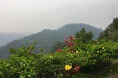 拉努马法纳国家公园看法和热带雨林在马达加斯加 库存照片
