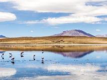 拉古纳卡拉有山的反射的,爱德华多A盐湖 免版税库存图片