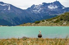拉古纳埃斯梅拉达在乌斯怀亚,巴塔哥尼亚,阿根廷附近的火地群岛 库存图片