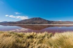 拉古纳罗亚,有山的反射的,爱德华多Avaroa安地斯山的动物区系国家储备,玻利维亚盐湖 库存照片