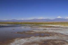拉古纳Cejar,阿塔卡马,智利 免版税库存图片