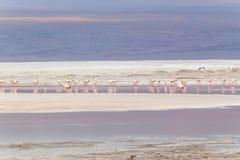 拉古纳Colorada, Uyuni,玻利维亚 库存照片
