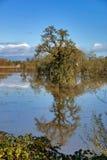 拉古纳De圣罗莎树 免版税库存图片