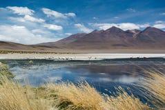 拉古纳Hedionda -有桃红色火鸟的盐湖 库存图片