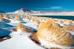 拉古纳Miscanti Miscanti在Altiplano的盐水湖和塞罗Miscanti Miscanti小山 库存图片