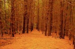 拉古纳Torca森林储备智利的沿海森林 库存照片