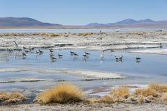拉古纳y Termas de Polques与撒拉族de Chalviri的温泉水池在背景,撒拉族de Uyuni,波托西,玻利维亚中 免版税图库摄影