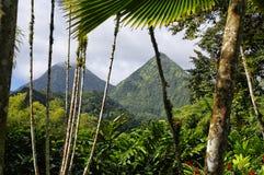 巴拉塔树胶,马提尼克岛热带庭院  免版税库存照片