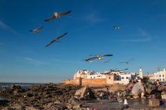 索维拉市视图,摩洛哥 库存照片