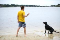 黑拉布拉多狗坐池塘的岸 图库摄影