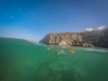 拉布拉多狗游泳有飞碟库拉索岛景色 免版税图库摄影