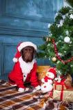 黑拉布拉多猎犬与礼物坐圣诞节装饰背景 免版税库存图片