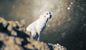 拉布拉多猎犬在小山-抽象风雨如磐的背景的狗小狗 免版税库存图片