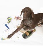 拉布拉多猎犬画象 库存图片