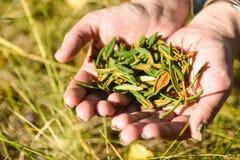拉布拉多茶 免版税库存照片