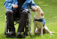 拉布拉多领路狗和他的残疾所有者 免版税库存图片
