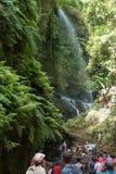 `拉帕尔玛岛,加那利群岛,西班牙- 2017年8月13日:敬佩Los蒂洛斯岛,生物圈储备森林的瀑布的人们  免版税库存照片
