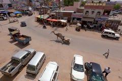 拉扯在城市场面的骆驼推车 免版税库存照片